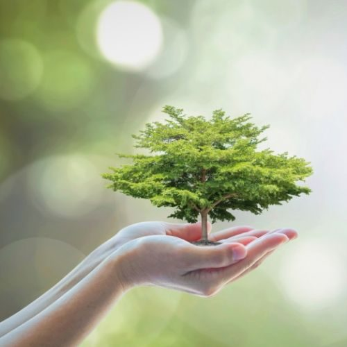 about Cellulose and Renewable Materials (1)